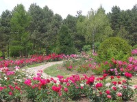 The Botanical Garden of Iasi