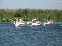 Wildlife at Delta Dunarii – moors, fish and bird colonies